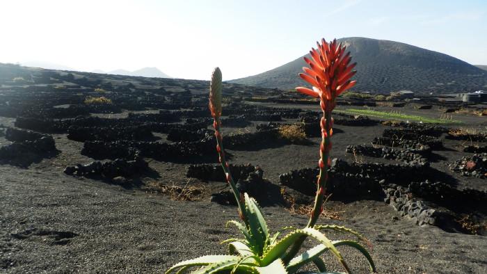 Extremlauf auf der Vulkaninsel Lanzarote. © Triebl, AK Stmk