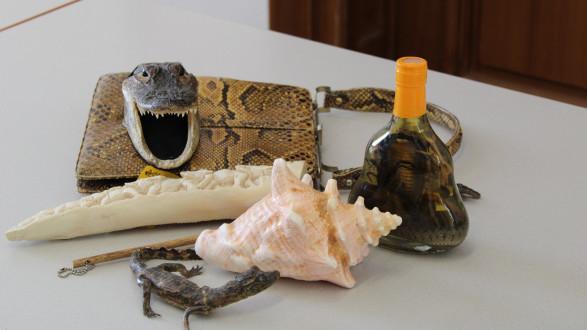 Krokodilledertaschen oder andere Sou- venirs aus artenge- schützten Tieren oder Pflanzen sollten für Reisende tabu sein. © Heidorn, AK Stmk